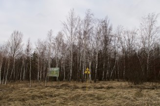 "Der ""Rote Wald"" in Tschernobyl ist hochgradig radioaktiv verseucht."
