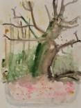 Altes und totes Holz ist für das Ökosystem Wald sehr wichtig - Aquarell