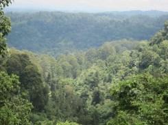 Blick über die bewaldeten Hügel von Kaffa, Äthiopien