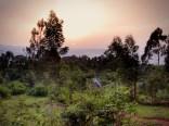 Abendlicht über einer Hütte am Waldrand in Kaffa, Äthiopien