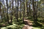 Sonniger Weg durch den Wald am Ritten in Südtirol