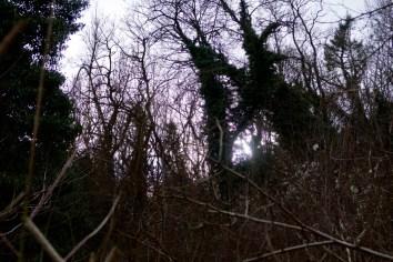Im Siebengebirge kann man sich auch im Wald verlaufen