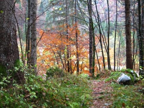 Herbstlicher Pfad durch den Wald