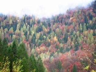 Bunte Herbstfarben im Wald in den Bergen