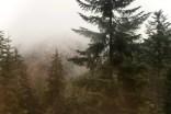 Im Schwarzwald, Ende November
