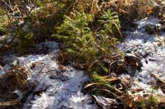 Junge Bäumchen im Winter