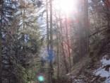 Wintersonne im Wald
