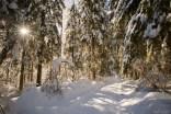 Warme Sonnenstrahlen im verschneiten Wald