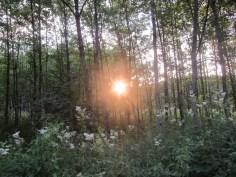 Sommerliche Abendsonne im Wald