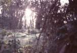 Eine sonnige, etwas verwunschene Lichtung bei Bonn-Mehlem