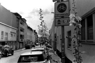 Blumen am Straßenrand in Bonn Beuel