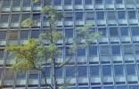 Baum vor einem Bürohaus im Tulpenfeld