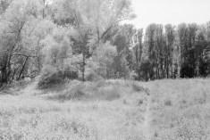 Kleiner Pfad im Auenland