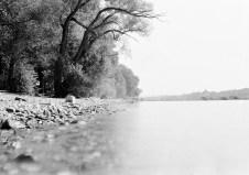 Große Bäume über dem Rhein