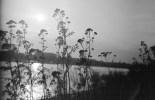 Gräser und Pflanzen am Rheinufer im Abendlicht