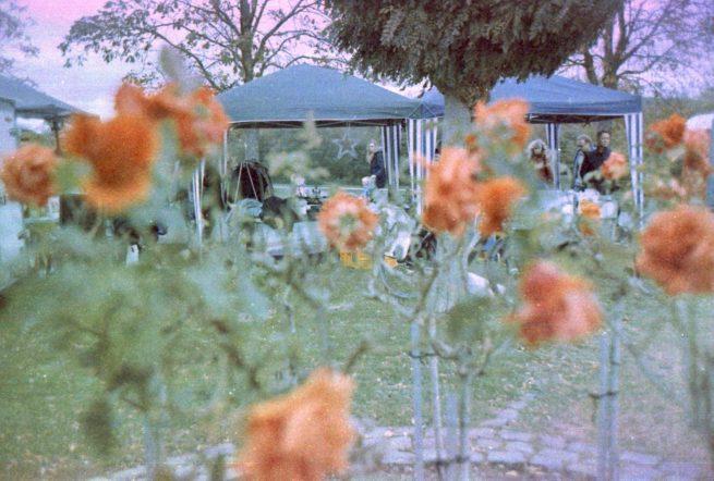 Flohmarkt in der Rheinaue - Pavillons durch rote Rosen