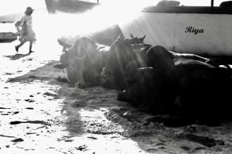 Kühe im Abendlicht 2