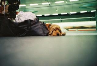 Trashig mit der LOMO in Berlin - 13