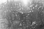 Leuchtender Winterbusch