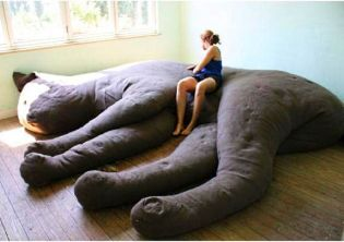 cat-couch