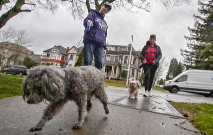 Apartment Uses Dna For Dog Accountability