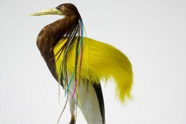 avian-architecture-and-bird-hairdos-by-karley-feaver-designboom-13