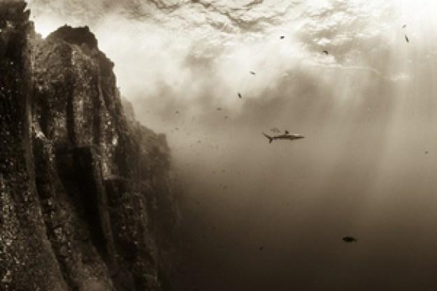 Silkie shark at Roca Partida by Christian Vizi