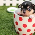 10 Cutest Puppy Videos Lovetoknow