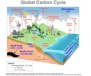 Carbon Cycle Diagram   LoveToKnow