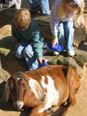 Petting Zoo Birthday Party Lovetoknow