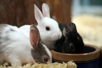 How To Take Care Of A Rabbit LoveToKnow