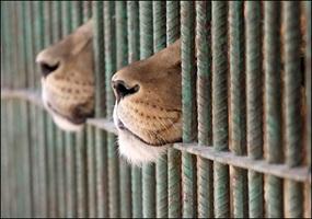 against zoos ile ilgili görsel sonucu