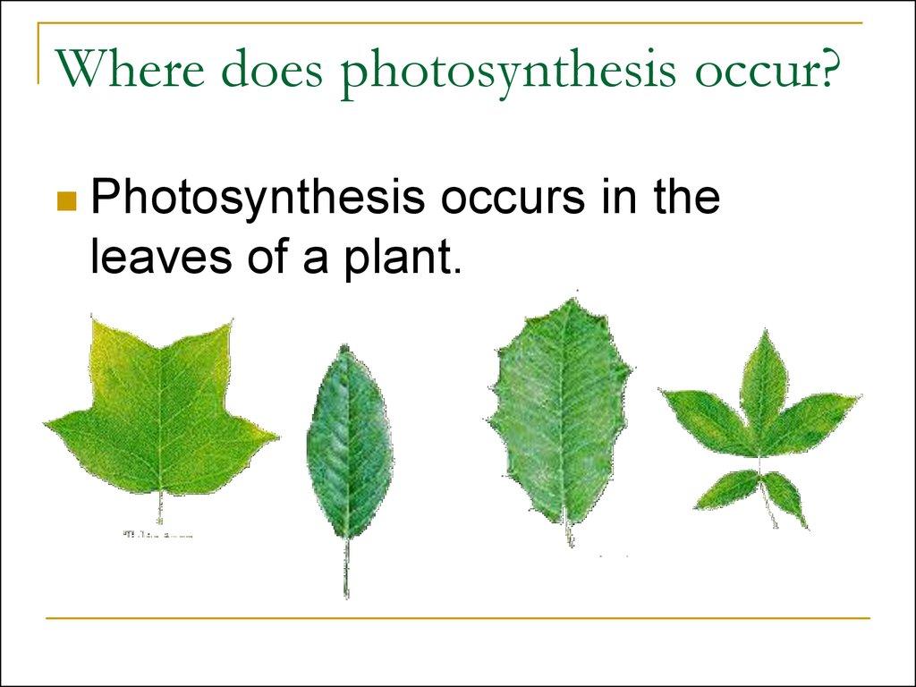 Photosynthesis Grade 3