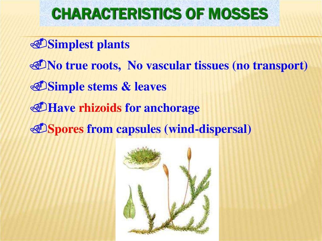 Examples Non Flowering Plants