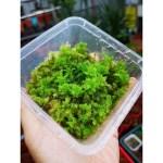 Live Sphagnum Moss Live Moss Shopee Malaysia