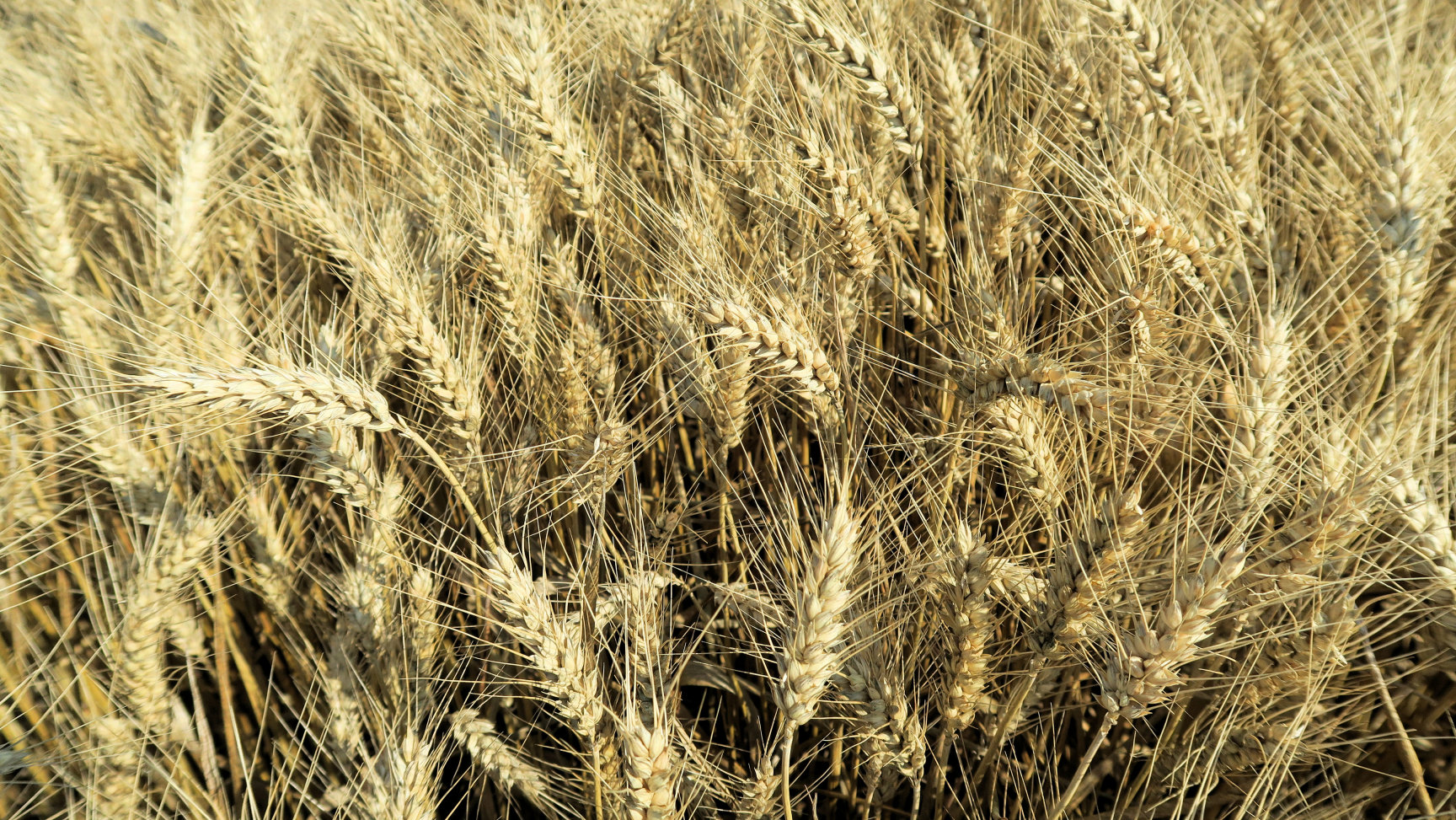 CAPA Métiers de l'agriculture