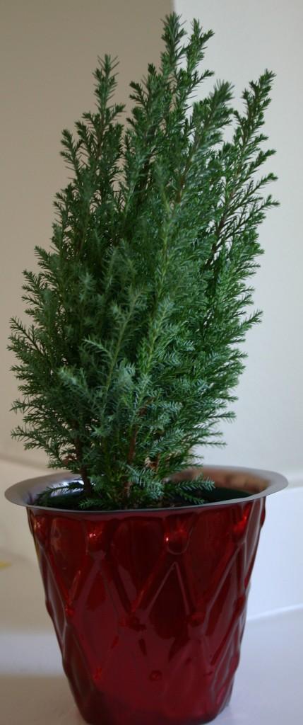 Home Depot Christmas Gifts