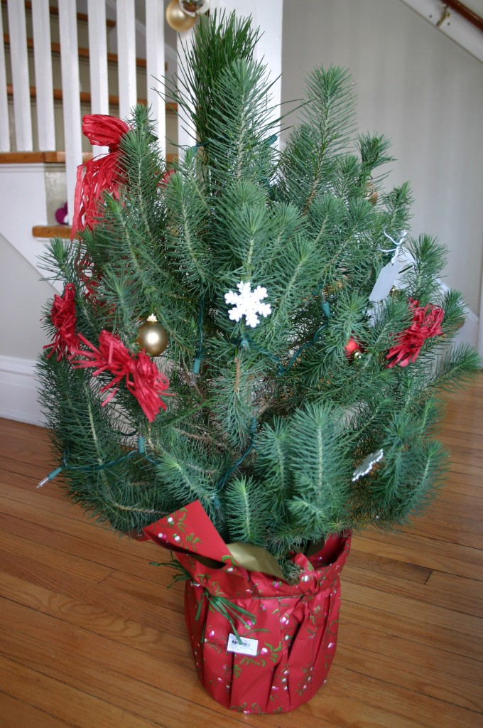 Quick Change Christmas Tree Family Chic By Camilla
