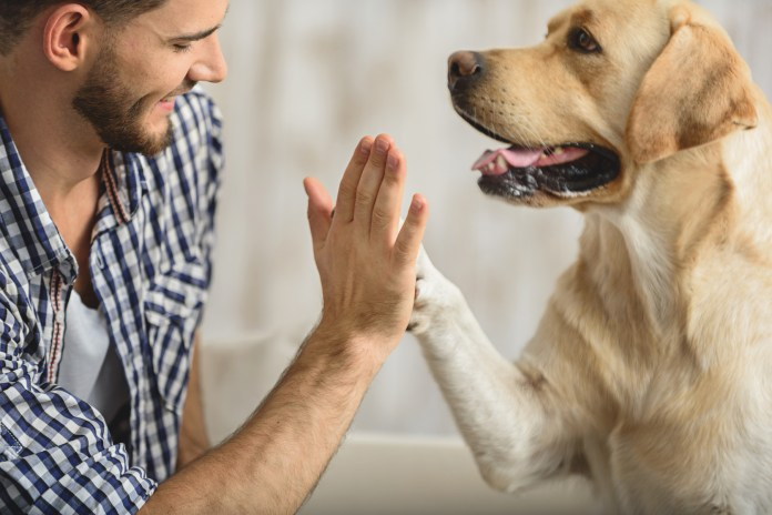 Your dog loves when you smile. Here's why! • Earth.com
