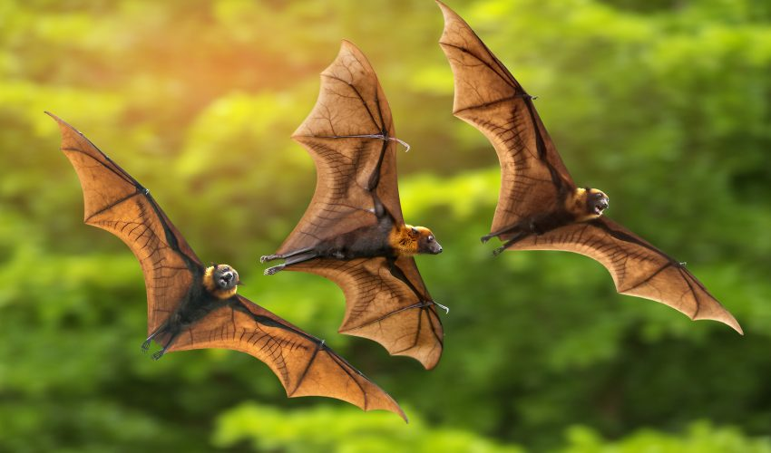 How Bats Use Echolocation To Hunt Prey Earth