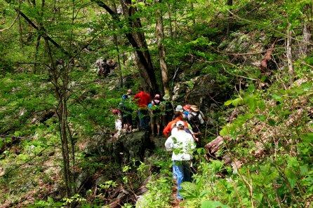 Buck Springs trail