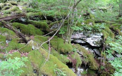 Mossy spot