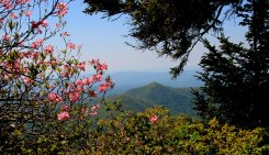 View from the trail with Pinkshell azalea