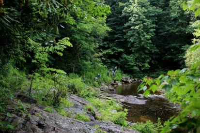 Along the East Fork Pigeon River