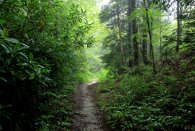 A dry trail