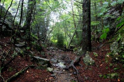A wet trail