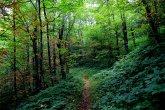 Bearpen Gap trail