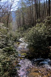 East Fork Chattooga River