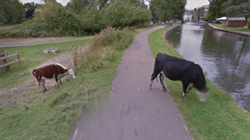 Google Street View protects cows identity.
