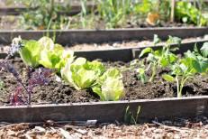 website-community-garden